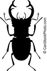 escarabajo del macho