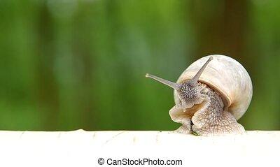 escargot, bois, bouleau