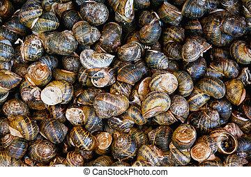 Escargot display - Edible snails on display at a Greek...