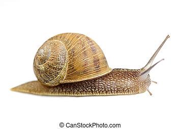 escargot, ramper