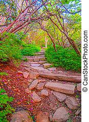 escarpado, jardín, rastro