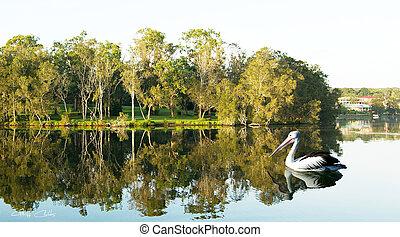 escena, árboles, agua, verde, reflections., tranquilo