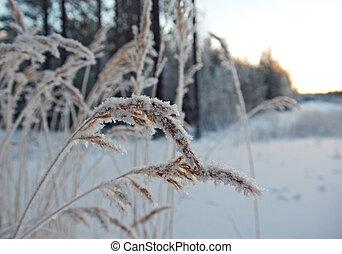 escena del invierno, .frozenned, flor, .