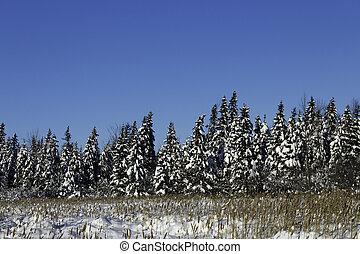 escena del invierno