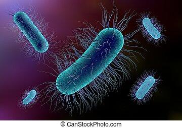 Escherichia coli bacterium, 3D illustration. Gram-negative...