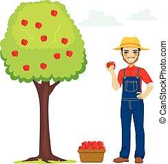 escoger, manzana, granjero