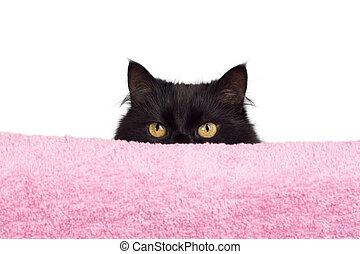 escondendo, gato preto