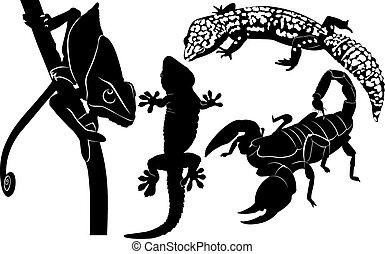 escorpião, gecko, camaleão