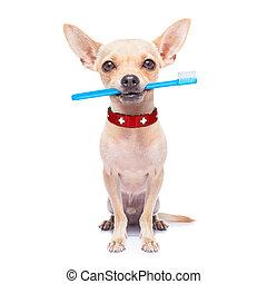 escova de dentes, cão