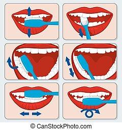 escovar, vetorial, correto, dente, infographics