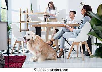 escritório, desgaste, multiethnic, formal, mulheres, cão, trabalhando, jovem