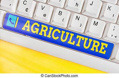 escritura, llave, teclado, ganado, producir, coloreado, cultivar, levantar, foto, arreglado, cosecha, tierra, texto, vacío, accesorios, empresa / negocio, copia, conceptual, actuación, mano, agriculture., práctica, space.
