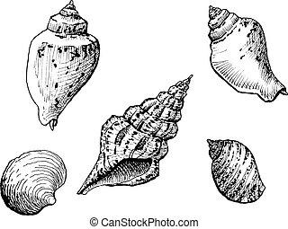 escudos mar
