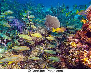 escuela, amarillo, peces