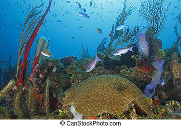 escuela, encima,  coral,  tropical, arrecife, pez