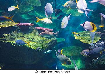escuelas, pez