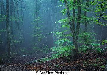 escuro, antigas, outono, rastro, através, floresta, misteriosa, fog.
