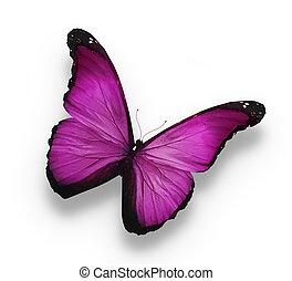 escuro, borboleta, branca, isolado, violeta