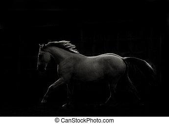 escuro, branca, corrida, cavalo