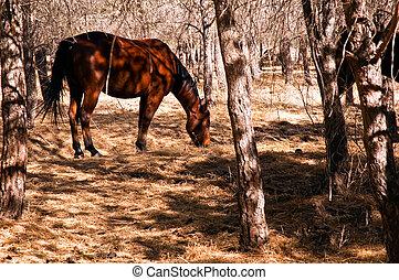 escuro, cavalo, em, a, outono, .