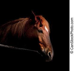 escuro, cavalo
