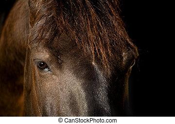 escuro, cavalo, olho, fundo