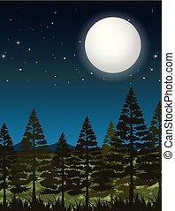 escuro, cena noite, floresta