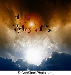 escuro, corvos, céu