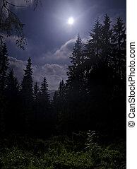 escuro, luar, floresta, sob