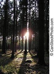 escuro, luz, floresta