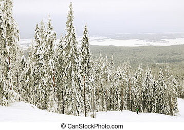 escuro, paisagem inverno
