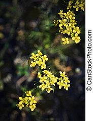 escuro, pequeno, flores, fundo, amarela
