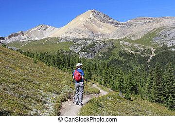 escursionista, in, jasper parco nazionale