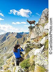 escursionista, montagne, ragazza, ibex, fotografo