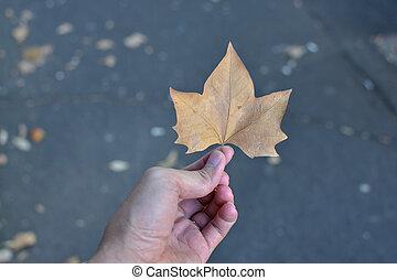 esdoorn blad