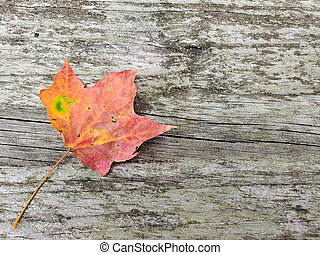 esdoorn, herfstblad, hout