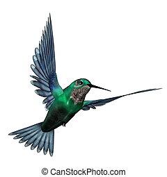 esmeralda, colibrí, -, 3d, render