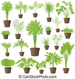 Esotico cespugli dettagliato albero collezione erba for Concetto casa com
