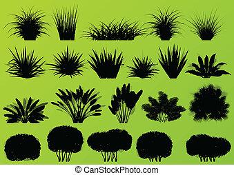 esotico, cespugli, dettagliato, albero, collezione, erba, piante, silhouette, vettore, palma, illustrazione, fondo, selvatico, canna, giungla