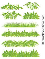 esotico, dettagliato, concetto, illustrazione, tropicale, piante, silhouette, vettore, verde, giungla, fondo, collezione, erba, paesaggio