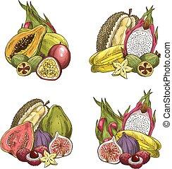 esotico, fresco, vettore, frutte tropicali