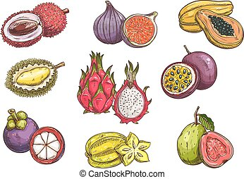 esotico, frutte tropicali, disegnato, mano