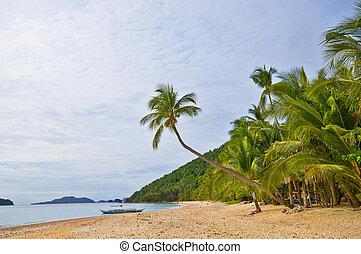 esotico, selvatico, spiaggia