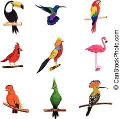 esotico, set, uccelli