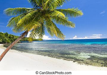 esotico, spiaggia, palma
