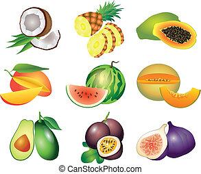 esotico, vettore, set, frutte