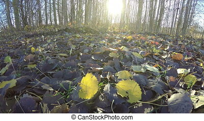esp boom, bladeren, in, herfst, bos