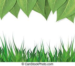espaço, folhas, text., vetorial, experiência verde, horizontais, capim, borda, eps-10., vazio