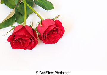 espaço, texto, dois, rosas, fundo, branco vermelho