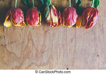 espace, bouquet, gratuite, tulipe, bois, planche